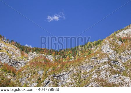 Forest On A Sheer Cliff In Triglav National Park In Slovenia