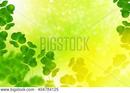 Green Clover Leaves. St.patrick \'s Day. Spring Natural Background.
