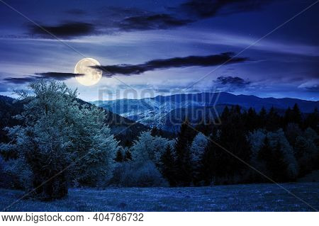 Forest On The Grassy Meadow In Mountains At Night. Beautiful Countryside Landscape In Full Moon Ligh