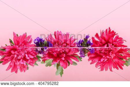 Pink Chrysanthemum Flowers Floating In Water Half Under Water On Pastel Pink Background. Organic Ski