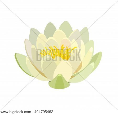 Yellow Water Lily Or Lotus Flower On A White Background. Vector Illustration