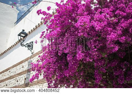 Pink Flowers Growing On The Narrow Streets Of Andalusian White Town Mijas