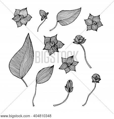 Flower Leaves Striped Monochrome Doodle Set Art Design Elements Stock Vector Illustration For Web, F