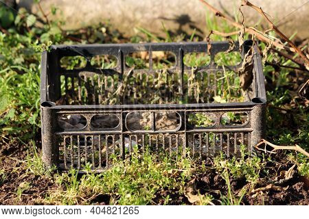 Dirty Old Black Plastic Crate With Perforated Base And Sides Made From High Density Polyethylene Use