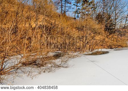 Dry Leafless Trees Lining Shoreline Of Snow Covered Frozen Lake.