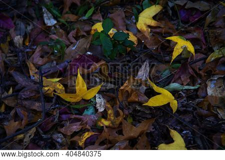 Closeup Macro Of Leaves Lying On The Ground During Autumn Fall Season