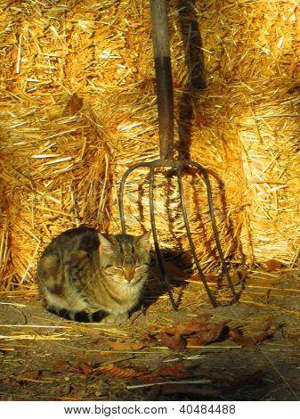 Kitten and Pitchfork