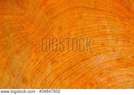 Cross Section Tree Trunk. Black Alder Tree Trunk Wooden Texture.