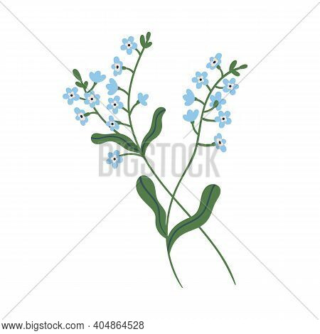 Small Blue Forget-me-not Flowers On Stem With Leaves. Delicate Blooming Forgetmenots. Botanical Flor