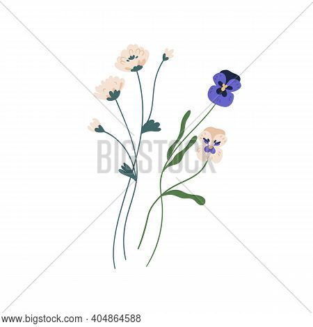 Gorgeous Bunch Of Blossomed Wildflowers Like Pansies And Clovers. Delicate Wild Flowers Isolated On