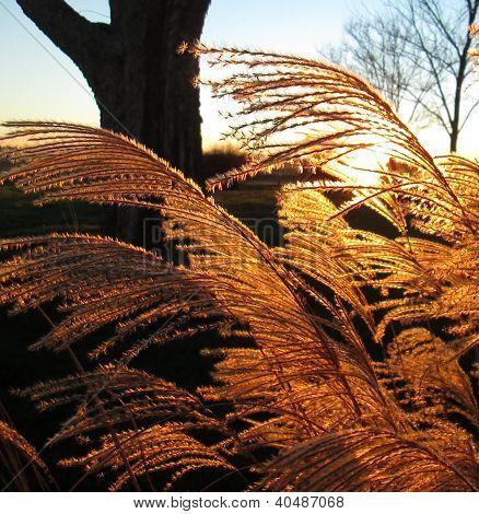 Golden plant