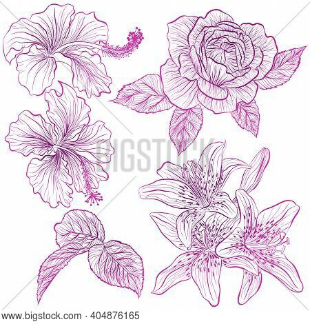 Vector Illustration In Line Art Style. Set Of Flowers Of Hibiscus, Rose, Lily Isolated On White Back
