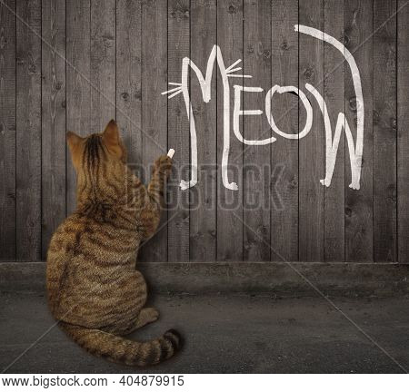 A Briege Cat Wrote Meow In Chalk On The Wooden Fence.