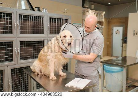 Mature vet examining the pedigree dog with stethoscope at vet clinic