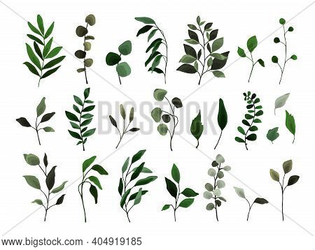 Collection Of Greenery Leaves Branch Twig Flora Plants. Floral Watercolor Wedding Objects, Botanical