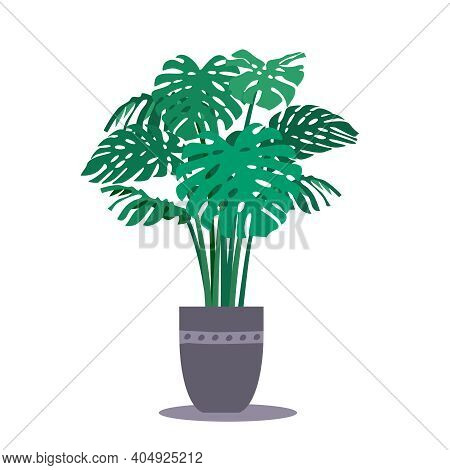 Monstera Interior Plant In The Pot. Vector Illustration, Flat Style. Tropical Foliage, Stems And Lea