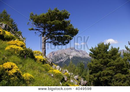 June In The Aragonese Pyrenees