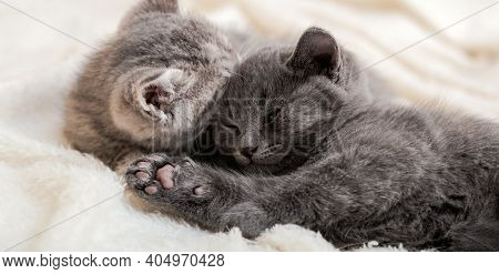 Couple Fluffy Kitten Relax On White Blanket. Little Baby Gray And Tabby Adorable Cat In Love Sleepin