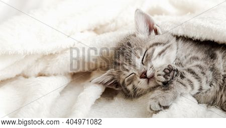Cute Tabby Kitten Sleep On White Soft Blanket. Cats Rest Napping On Bed. Comfortable Pets Sleep At C