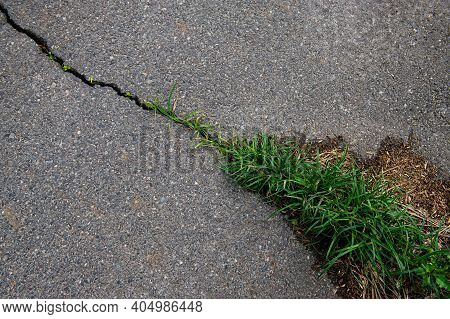 Crack In The Asphalt Road And Grass Growing In The Crack. Spring Season.