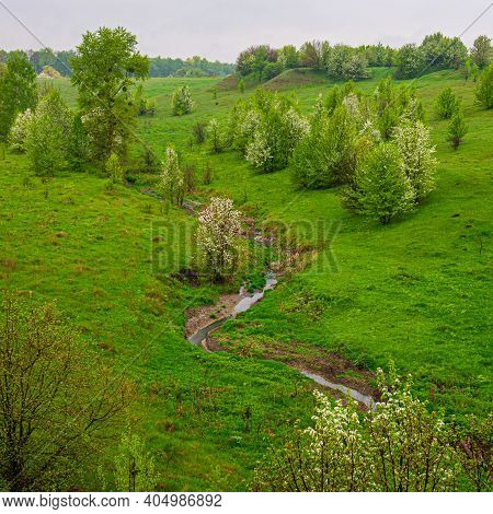 Stream And Deciduous Flowering Trees In A Meadow In A Hilly Area. Spring Season. Ukraine. Europe.