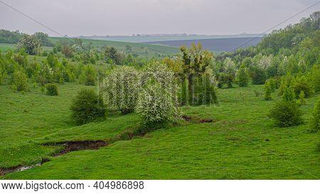 Stream And Deciduous Flowering Trees In A Meadow In A Hilly Area. Spring Season. Ukraine. Europe. Pa