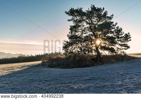 Rays Of Sunshine Through The Pine Trees. Frosty Winter Morning.  Sunrise In The Winter Morning. Cold