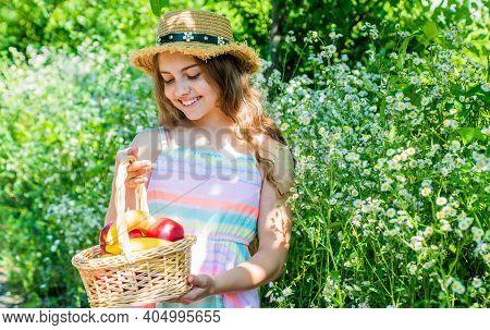 Its Harvest Time. Little Kid Harvest Crop In Summer Garden. Small Girl Hold Fruit Basket Floral Land