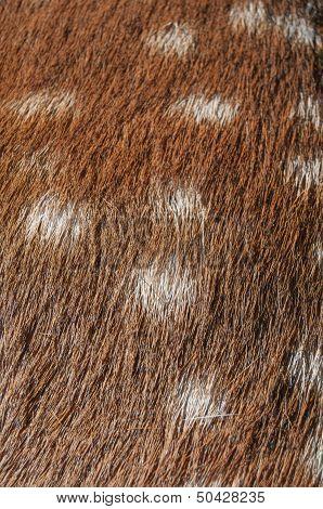 Deer Fur Texture