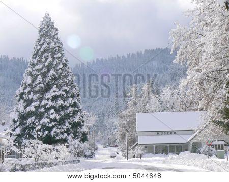 Giant Sequoia In Winter