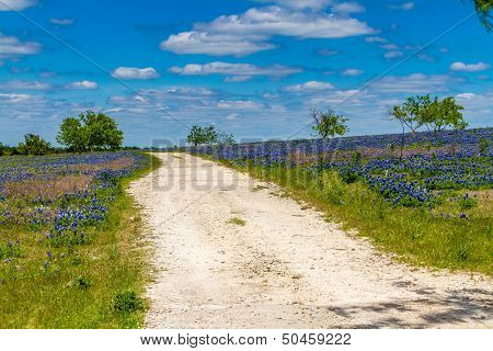 A Rural Texas Dirt Road in a Field Blanketed with the Famous Texas Bluebonnet (Lupinus texensis) Wildflowers.  Taken on the Texas Prairie south of Dallas.  Blue skies, white clouds, and rural dirt road. poster