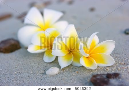 Tropical Flower Composition