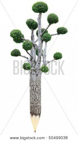 Pencil Of Wood Material With Fresh Leaves. Green Planet Concept