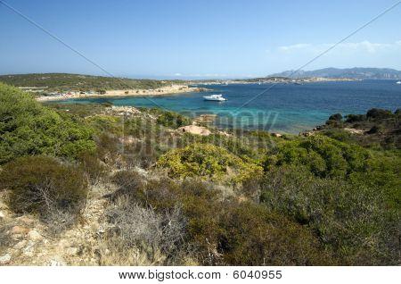Mediterranean Scrub And Blue Sea