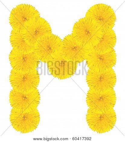 Letter M Made From Dandelions