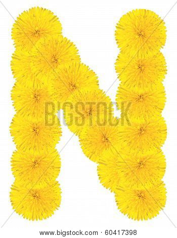Letter N Made From Dandelions
