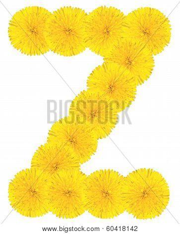 Letter Z Made From Dandelions