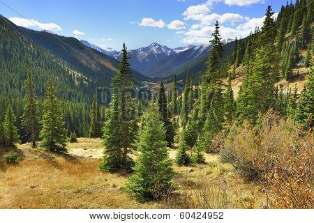 Spruce And Pine Trees And Mountains Of Colorado