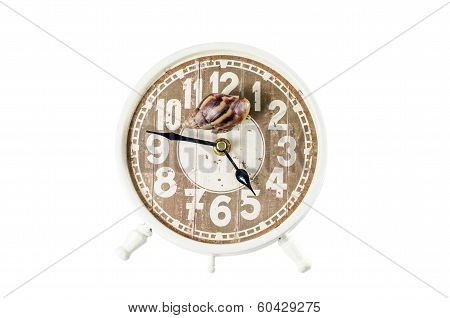 Snail on an alarm clock time concept.Clipping path included poster