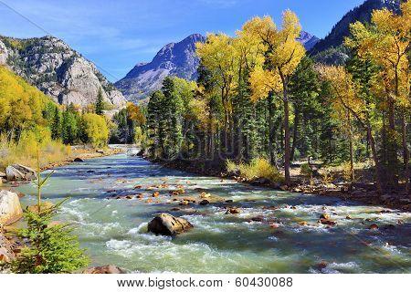 mountain river and colourful mountains of Colorado during foliage season poster