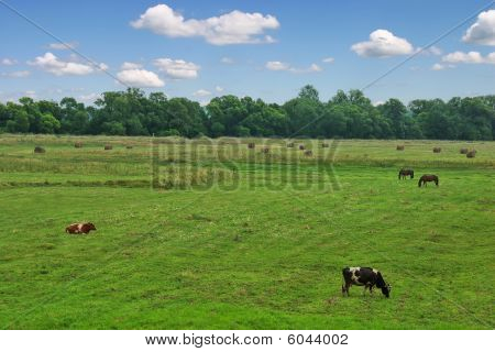 Rural landscape with cows and horses