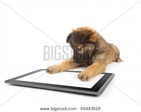 one tablet on the white backgrounds and dog on the talet like ipades