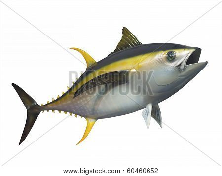 Yellowfin tuna in fast swimming motion, isolated poster
