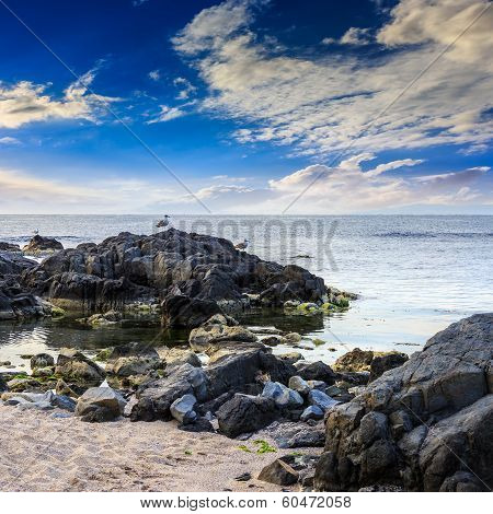 Seagulls Sit On Big  Boulders Near The Sea Watching Waves