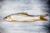 fish on wooden background fish over natural wood background poster