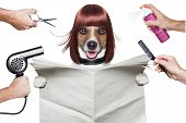hairdresser dog holding a white blank newspaper or magazine poster