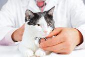 Unrecognizable male vet listens a sick feline poster