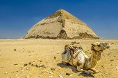 A row of camels transport tourists in front of all of the Dakshur Pyramids in Cairo, Egypt poster