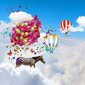Fantasy image of zebra flying in sky on bunch of colorful balloons poster