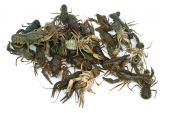 Pile of live crawfishes isolated on the white background poster